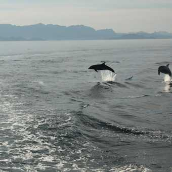 Two dolphins jump