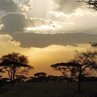 Safari sunset 2