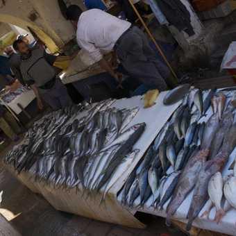'Time for Tea', fish market, Essaouira