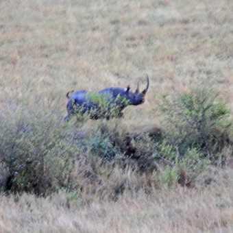 Black Rhino seen from baloon
