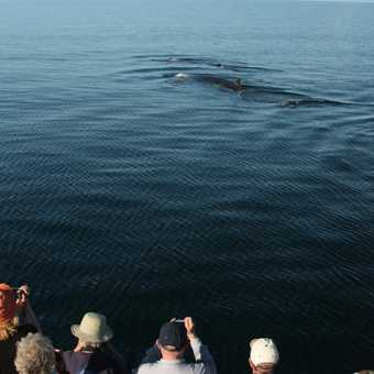 Observing a Fin Whale