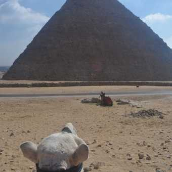 View from a camel!
