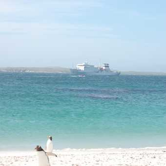 The ship, the beach and a penguin