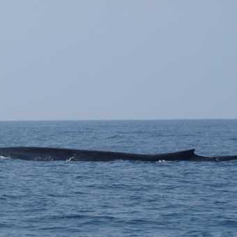 Blue Whale logging