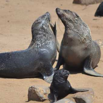 I think these seals are having a good gossip