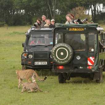 Enjoying watching cheetahs