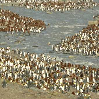 Mass Kings at St Andrews Bay