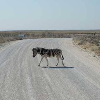 The cliche zebra crossing
