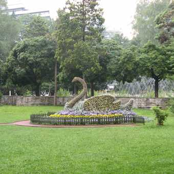 Hedge sculpture in Krynica