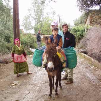Donkey delight in Aut Zitoun, Berber countryside