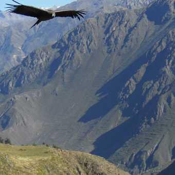 colca canyon , flying high