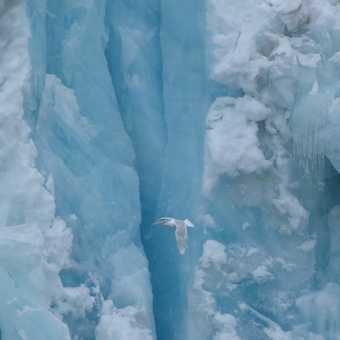Bird against glacier