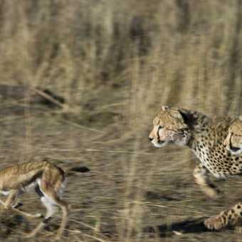 Chakiras three girls chasing foal