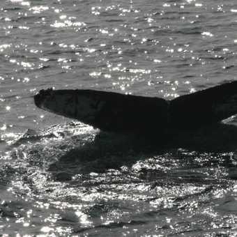 Sunbathing Weddell Seal Neko Harbour