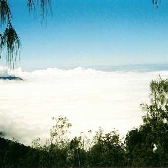 This is the clouds below me as I was leaning against the tree on the ascent.