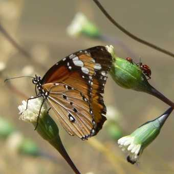 Butterfly in Damaraland Camp