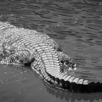 Mr. Croc enjoying a bubble bath
