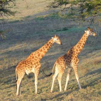 Morning in the Masai
