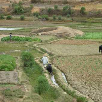 Rice paddies near Tana