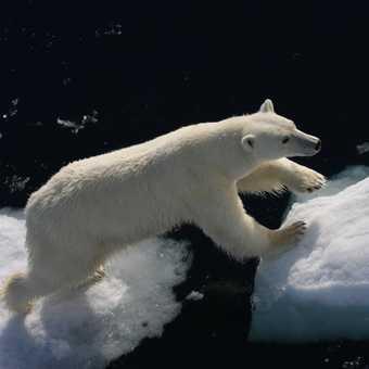 close bear 2