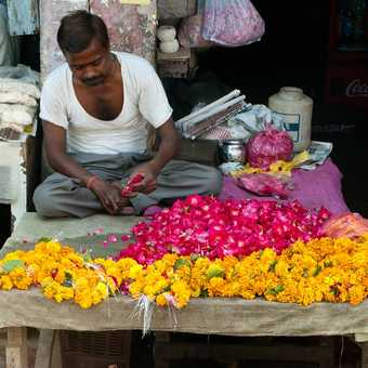 Flower seller on route to Fatehpur Sikri