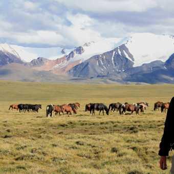 Mongolia 17