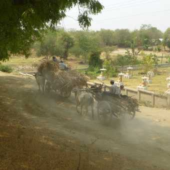 Traditional ox carts