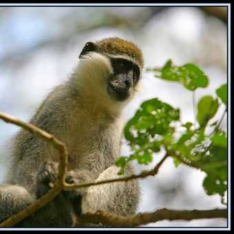 Primate2