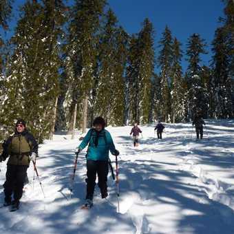 Downhill Snowshoeing