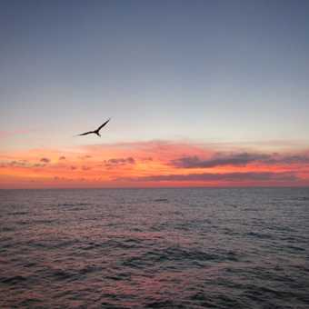 A second Frigate bird circling the boat at sunset