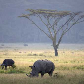 Lake Nakuru Scene