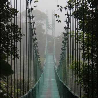 you first! walkway bridge through cloud forest
