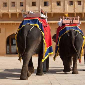 No. 84 and 91 at Amber Palace, Jaipur