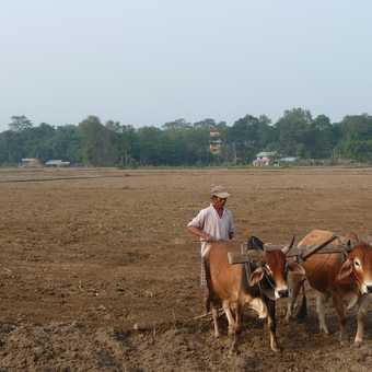 River, Chitwan