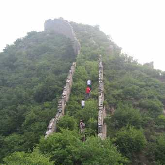 Feralonia Wall