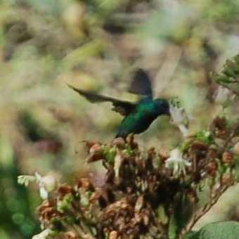 Humming bird seen on the Trail