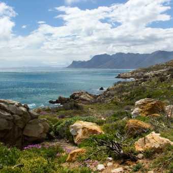Female ostrich - near Cape Point