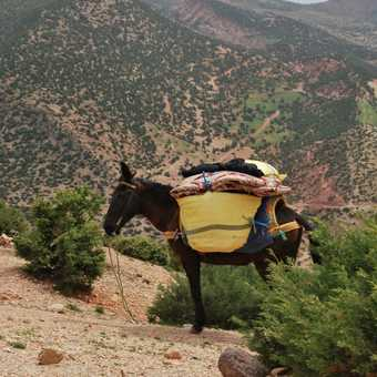 One of the mules
