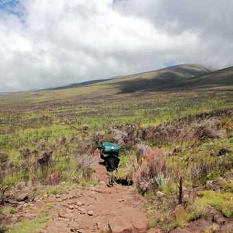 Kilimanjaro Flower