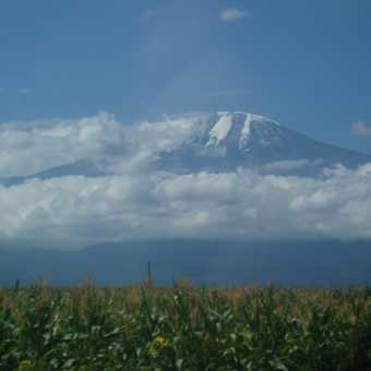 Kilimanjaro from the Plains