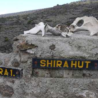 shira hut