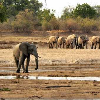 Eli family crossing the Luangwa River