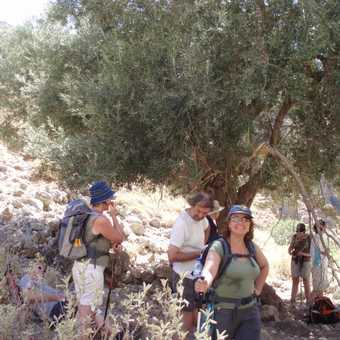 under an Olive tree