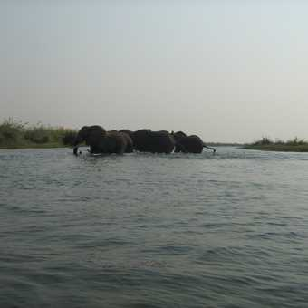 The elephants crossed the river behind us