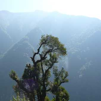 Forrest haze - Near Chomrong