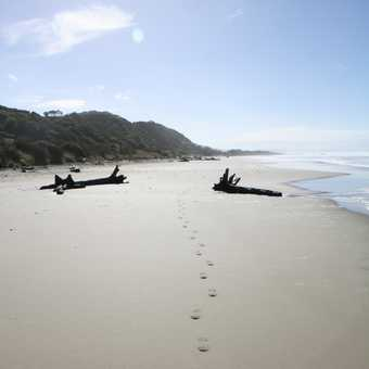 Beach track South Island NZ