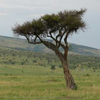 Just another day in the Masai Mara
