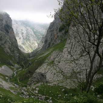 Gorge at Poncebos