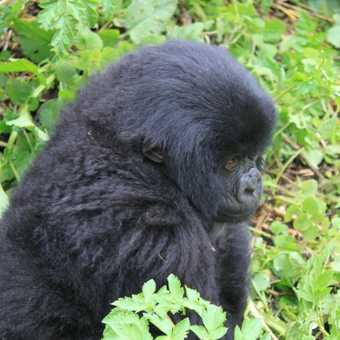 Juvenile on the move - Rwanda
