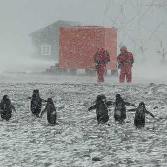 Blizzard at Orcadas